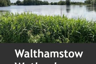 NYLAconsults Walthamstow Wetlands pic